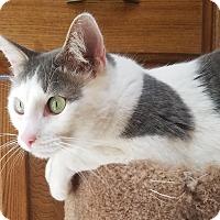 Adopt A Pet :: Doug - Oklahoma City, OK