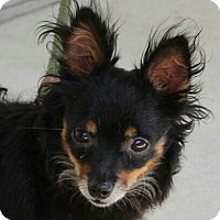 Adopt A Pet :: Paco - Hagerstown, MD