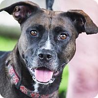 Adopt A Pet :: Sammy - Huntley, IL