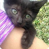 Adopt A Pet :: Yogi - Staten Island, NY