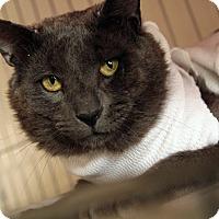 Adopt A Pet :: Wynton - St. Louis, MO