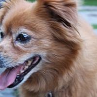 Adopt A Pet :: Koda 3437 - Toronto, ON