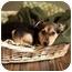 Photo 1 - German Shepherd Dog/Labrador Retriever Mix Puppy for adoption in Portland, Oregon - Clyde