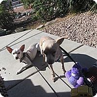 Adopt A Pet :: Frostie Only $25 adoption fee! - Litchfield Park, AZ