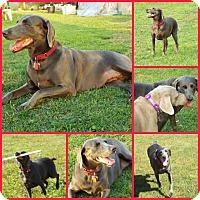 Adopt A Pet :: LUNA - Inverness, FL