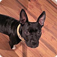 Adopt A Pet :: Hanna Rose - Greensboro, NC