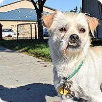 Adopt A Pet :: Captain Jack - Meridian, ID