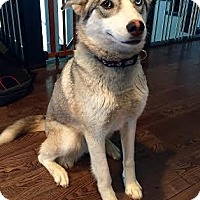 Adopt A Pet :: Storm - Saskatoon, SK