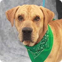 Adopt A Pet :: Harley - Garfield Heights, OH