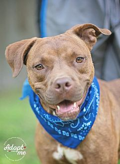 Terrier (Unknown Type, Medium) Mix Dog for adoption in Boston, Massachusetts - Ennis