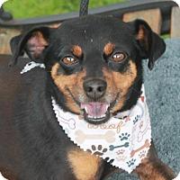 Adopt A Pet :: Hogan - Garfield Heights, OH
