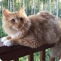 Adopt A Pet :: Gizmo - Wasilla, AK