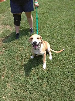 Hound (Unknown Type) Mix Dog for adoption in Sand Springs, Oklahoma - Ralph