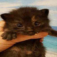 Adopt A Pet :: BOTTLE - Bakersfield, CA