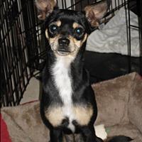 Adopt A Pet :: Jackson - Palm Harbor, FL