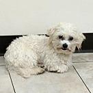 Adopt A Pet :: Benjamin Bicklebaum