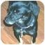 Photo 1 - Dachshund/Pekingese Mix Dog for adoption in Inman, South Carolina - Penny