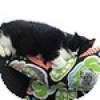 Adopt A Pet :: Missie - Vancouver, BC