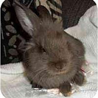 Adopt A Pet :: Tinker - Maple Shade, NJ