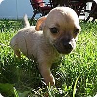 Adopt A Pet :: Dale - Burr Ridge, IL