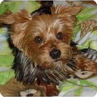 Adopt A Pet :: Sydney - West Palm Beach, FL