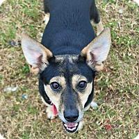 Adopt A Pet :: Walnut - Bedminster, NJ