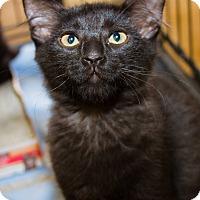 Adopt A Pet :: Henley - Irvine, CA