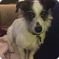 Adopt A Pet :: Sparky Jo-PENDING!!! - Lynnwood, WA
