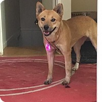 Adopt A Pet :: Sylvie - Los Angeles, CA