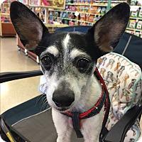 Adopt A Pet :: Freddy - Brea, CA