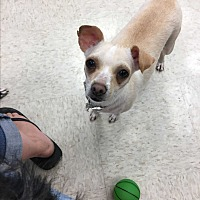 Adopt A Pet :: Kinsley - Gilbert, AZ