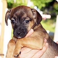 Adopt A Pet :: Duder Bug - Marion, NC