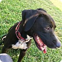 Adopt A Pet :: Kai - Baltimore, MD