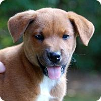 Adopt A Pet :: Onceler - Garner, NC