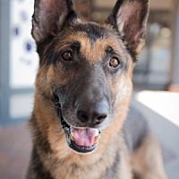 Adopt A Pet :: Gus A. - Sacramento, CA