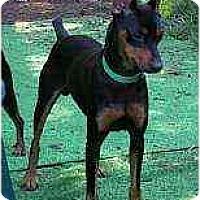 Adopt A Pet :: Mighty Quinn - Summerville, SC