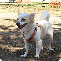 Adopt A Pet :: Weda - Los Angeles, CA