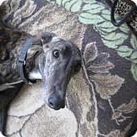 Adopt A Pet :: Meryl Davis - Cottonwood, AZ