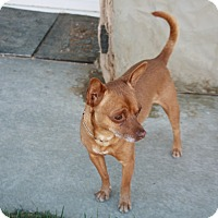 Adopt A Pet :: Benny - California City, CA