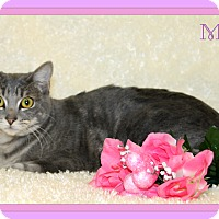 Adopt A Pet :: Marble - Tracy, CA