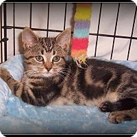 Adopt A Pet :: Artee - Such a Cutie - South Plainfield, NJ