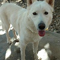 Adopt A Pet :: Daisy - Cedar Crest, NM