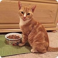 Adopt A Pet :: Karaka - St. Louis, MO