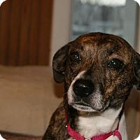 Adopt A Pet :: Bella Beatty - Urbana, OH