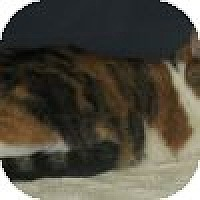 Adopt A Pet :: Chloe - Powell, OH