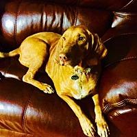 Adopt A Pet :: Daphne - Columbia, SC