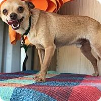 Adopt A Pet :: Heath - Elk Grove, CA