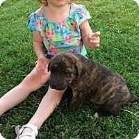 Adopt A Pet :: Crackerjack - Providence, RI