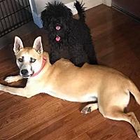 Adopt A Pet :: Daisy Mae - Los Banos, CA