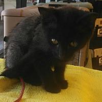 Adopt A Pet :: Actress - Scottsdale, AZ